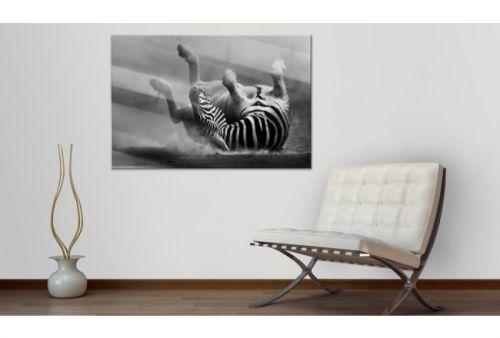 Quadro su vetro acrilico Zebra