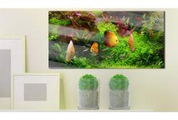 Quadro su vetro acrilico Fish Friend